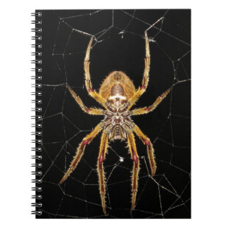 Insect Macro Spider Colombia Notebooks