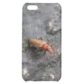 Insect on a rock. iPhone 5C covers