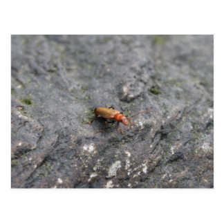 Insect on a rock. postcard