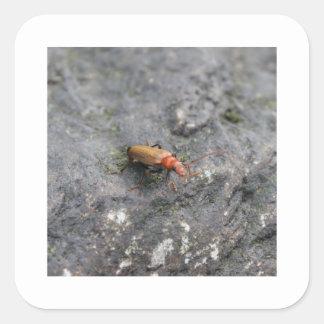 Insect. Square Sticker