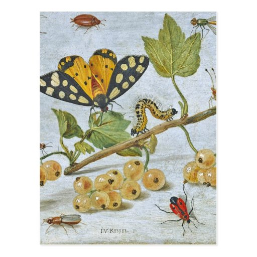 Insects Crawling Postcard