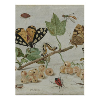 Insects & Fruits Postcard