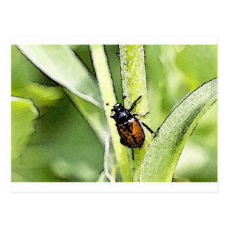 Insects Postcard