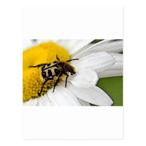 Insects Post Card
