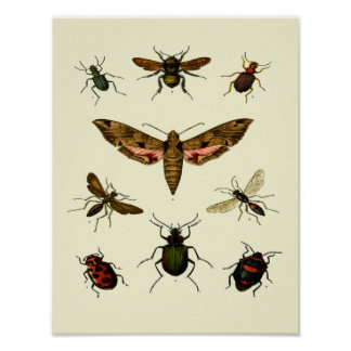 Insects-Print of 9 vintage insects Poster