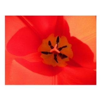 Inside a Tulip Postcard