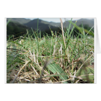 Inside, the lush green grass sprouts everywhere card