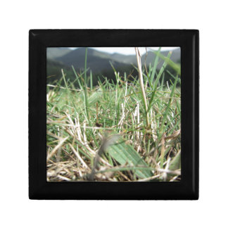 Inside, the lush green grass sprouts everywhere gift box