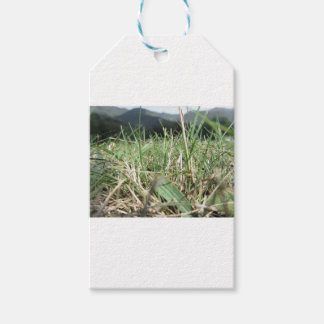Inside, the lush green grass sprouts everywhere gift tags