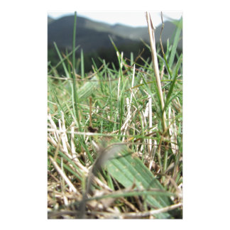 Inside, the lush green grass sprouts everywhere stationery
