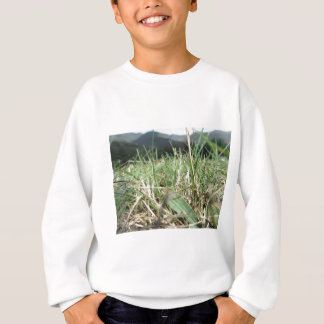 Inside, the lush green grass sprouts everywhere sweatshirt