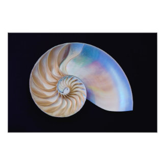 Inside The Nautilus Photo Print