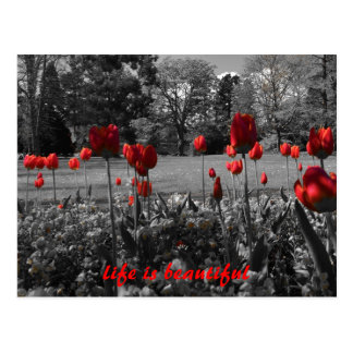 Inspirational Black and White with Red Tulips Postcard