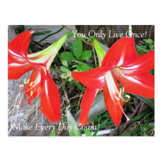 Inspirational Red Lily Flower: Postcard