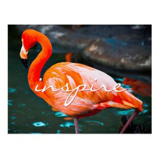 """Inspire"" quote pretty orange pink flamingo photo Postcard"