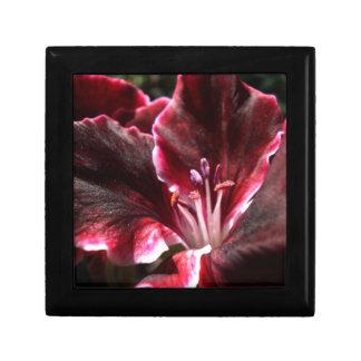 Inspired Geranium Gift Box