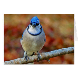 Intense Blue Jay - Bird Card
