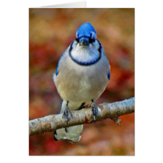 Intense Blue Jay - Bird - Vertical Card