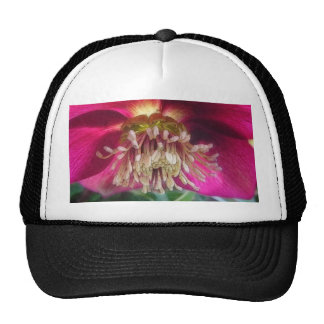 Interior Of A Delicate Spring Hellebore Flower Mesh Hat