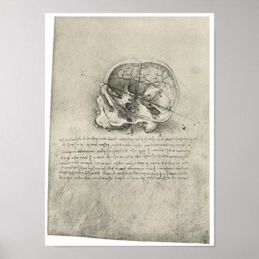Interior View of the Skull, Leonardo da Vinci Posters