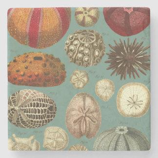 Intestina et Mollusca Linnaei Stone Coaster