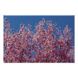Into the Blue Japanese Cherry Blossoms Tile Posters