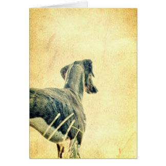 Into the Distance - Azawakh Greeting Card