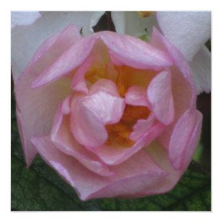 """Invitación - Fiesta Cumpleaños - La Rosa Rosa 5.25"""" Square Invitation Card"""