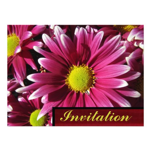 Invitation - Red Daisy Flowers