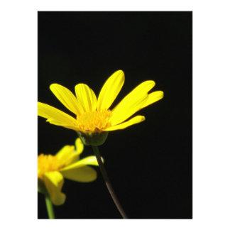 Invitation - Yellow Daisies