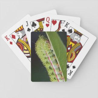IO Moth Caterpillar Playing Cards