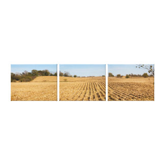 Iowa Cornfield Panorama Photo - 3 Stretched Canvas Canvas Print