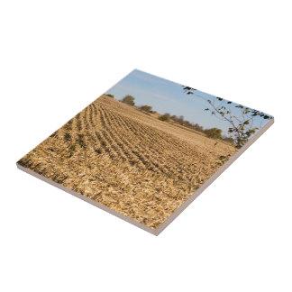 Iowa Cornfield Panorama Photo on Tile