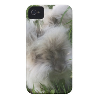 "iPhone 4 Case - English Angora Rabbit ""Bradley"""