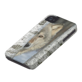 iPhone 4 case with pic of gray wolf in birch trees
