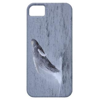 Iphone 5 Case-mate Humpback Whale breaching