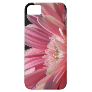 iPhone 5 case - Pink Daisy Flower