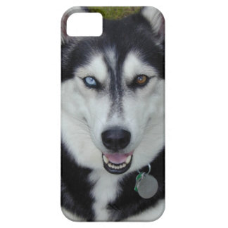 IPhone 5 Cover Siberian Husky