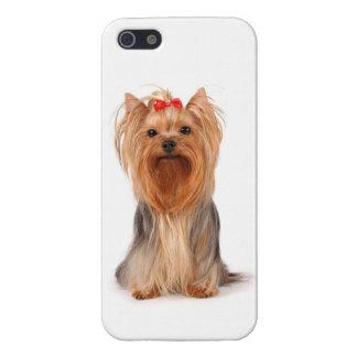 iPhone 5 Love Yorkshire Terrier Puppy Dog Case
