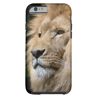 iPhone 6/6s, Tough Phone Case Lion