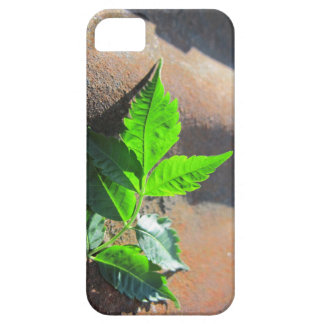 iPhone SE Leaf on Tin iPhone 5 Covers