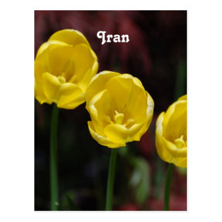 Iranian Tulip Postcard
