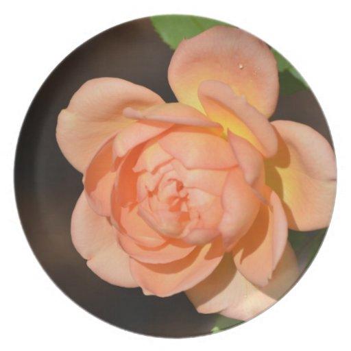 Iraqi Rose Dinner Plates