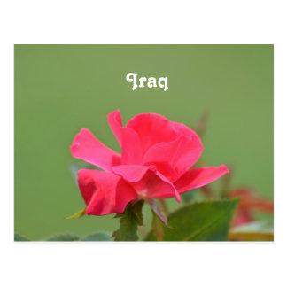 Iraqi Rose Postcard