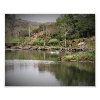 Ireland, County Cork, Lake, Swans, Photography Photo Print
