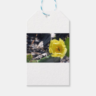 iridescent bee on nopales flower gift tags