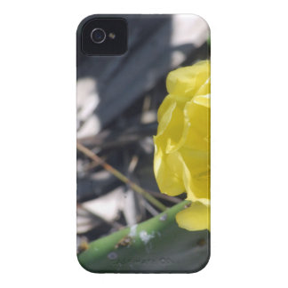 iridescent bee on nopales flower iPhone 4 Case-Mate cases
