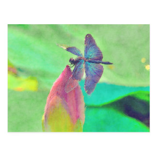 Iridescent Blue Dragonfly on Waterlily Postcard