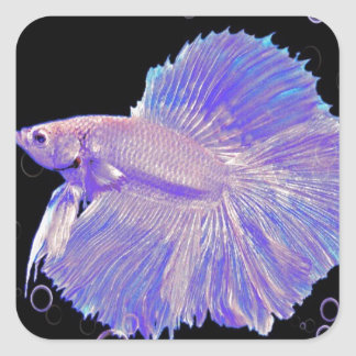 Iridescent Purple Fighting Fish Square Sticker