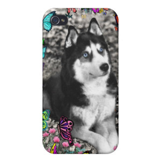 Irie the Siberian Husky in Butterflies iPhone 4 Cases